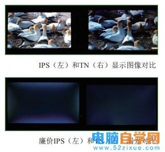 49.显示器篇-什么是IPS显示器,IPS面板好不好